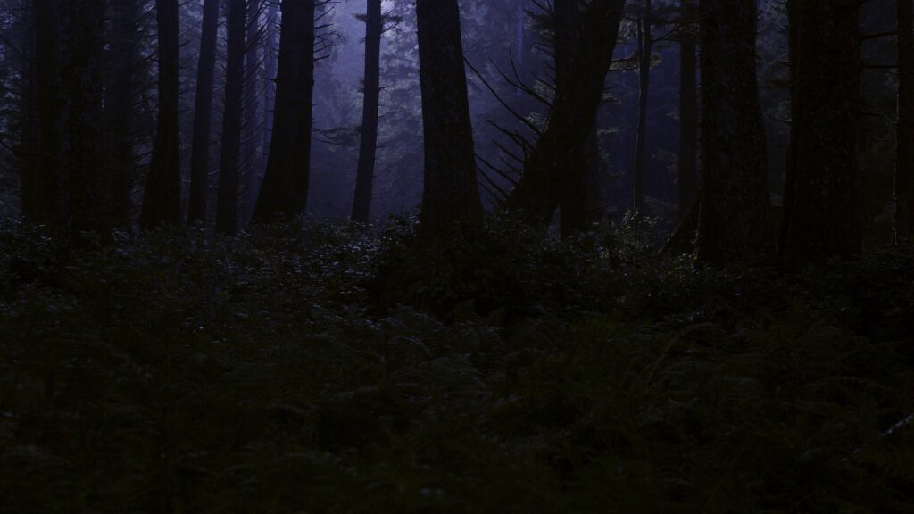 Dunkler Wald (Bild von Harmony Lawrence auf Pixabay)
