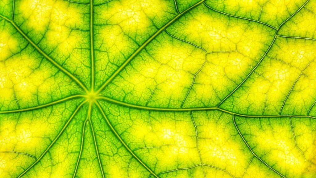 Blattgrün (Bild von AStoKo)